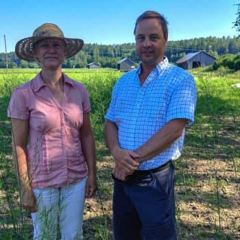 """Bäckängens trädgård i Hindsby i Sibbo odlar sparris: """"Vi är troligtvis de enda sparrisodlarna i Östnyland"""""""