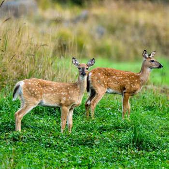 """Intresset för jakt minskar men mängden djur som får fällas ökar - jägare: """"Det här är mera en plikt än ett nöje"""""""