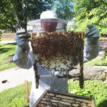 Biodling och honung är fascinerande – men kräver insatser
