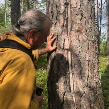 Voiko salama iskeä luonnossa monta kertaa samaan paikkaan?