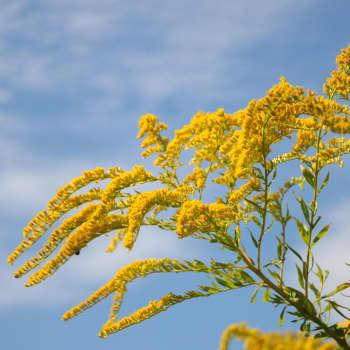 Kasvi haistaa, maistaa, näkee ja tuntee — se voi myös äännellä ja tunnistaa sukulaisensa