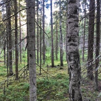 Suomen luonnonpäivän jälkimainingeissa