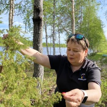 Geasseguossin Maritta Autio: Málesta buhtes borramušávdnasiin mat Sámi luonddus gávdnojit