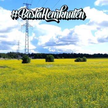Bästa hemknuten i Svenskfinland: Ladusved, Esbo