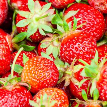 Kesä Dubaissa vaihtui lemiläiseen mansikkapeltoon