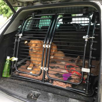 Kuinka kuljetat koiraa turvallisesti autossa?