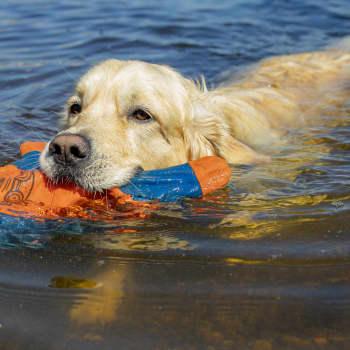 Tarmo unohtaa jopa herkkupalat veden äärellä - koirien uimapaikat ovat harvassa