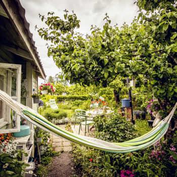 Kuppis koloniträdgård - en grön oas i Åbo centrum