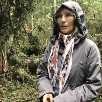 Luonnonperintösäätiö jatkaa Linkolan viitoittamalla tiellä; Kaikki raha alueiden ostoon ja suojeluun