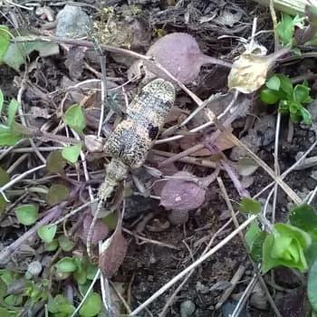 Vad är det här för ett odjur?