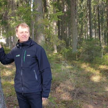 Kuusi valtaa tilaa Suomen talousmetsissä, ei niin hyvä juttu