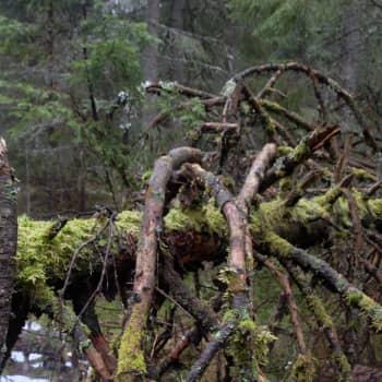 Metsässä mielikuvitus herää henkiin