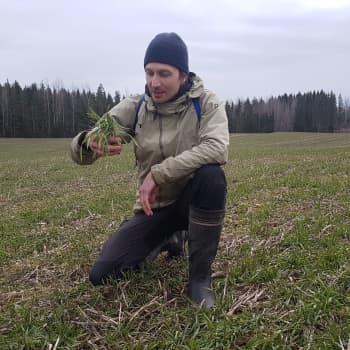Korona-virus ei pysäytä luonnon kiertokulkua - Maanviljelijä Juuso Joonalle maaperä on iho, jota tulee kohdella kunnioituksella