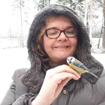 Jyväskylän yliopiston Konneveden tutkimusasemalla tehty videotutkimus varmisti: tiaiset viestivät toisilleen ruokasuosituksia