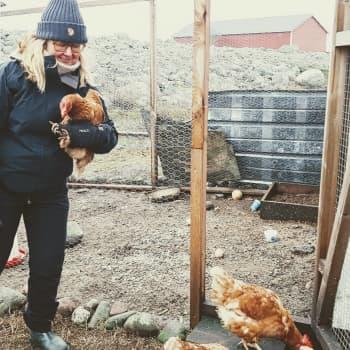 Etätyöläinen Minna Kattelus koordinoi saariston jazz-tapahtumia Utöstä käsin – ja käy lounastauolla ruokkimassa kanat