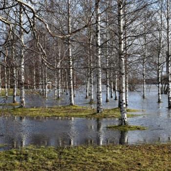 Asiantuntija: Uudet tulvariskit otettava huomioon kaavoituksessa