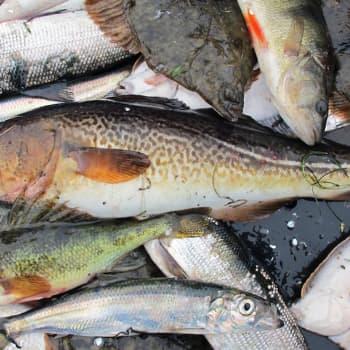 Syö erilaisia kaloja