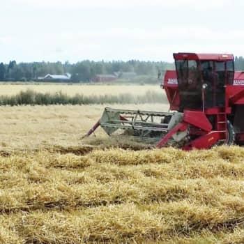 Muuttaako ilmastonmuutoskeskustelu EU:n maatalouspolitiikan, MTK:n puheenjohtaja Juha Marttila?
