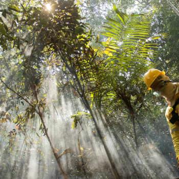 Voiko sademetsät vielä pelastaa?