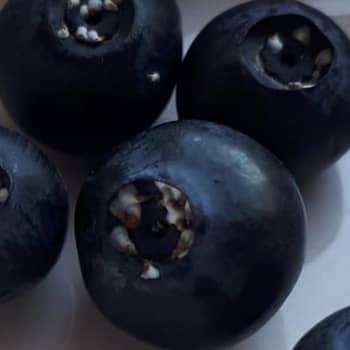 Vad har ett prickigt blåbär, en taggig larv, en stinkande fallos och ett nyfiket ode gemensamt? 1.8.2019, del 2