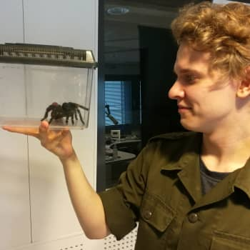 Teemu Siimes ei saanut pikkupoikana tuoda ötököitä kotiin - nyt niitä on parikymmentä lemmikkinä