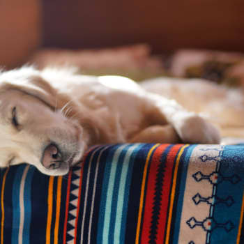 Nukkuvatko eläimet kuten ihmiset?