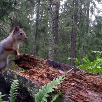 Oravakuvia niiden omasta perspektiivistä
