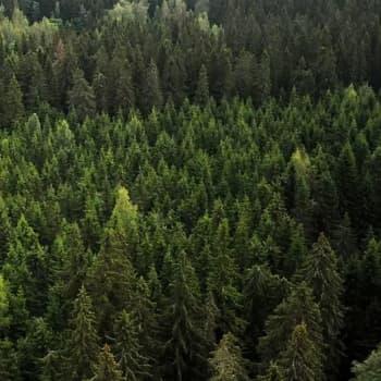 Metsävarat ja hiilinielu
