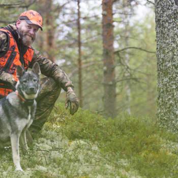 """""""Koirien kanssa katsotaan iltaisin televisiota"""" – Jarkko Aittola tiedostaa riskit metsästyskoiran ja suden kohtaamisesta"""