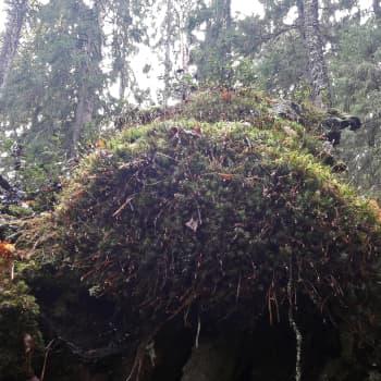 Miten metsässä löytää elämää?