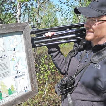 Pitäisikö joutsenia ruveta metsästämään?