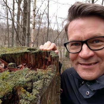 Metsäradio.: Metsäpuutarha on lähellä