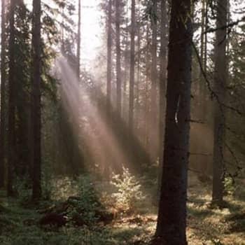 Mikä maksaa?: Riittääkö Suomessa puuta teollisuudelle?