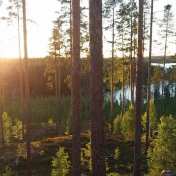 Radio Suomi Mikkeli: Asuntokaupan tulevaisuus Pieksämäellä – ennusteet povaavat hintojen laskua
