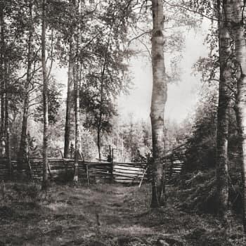 Minna Pyykön maailma: I.K. Inhan luontokuvat