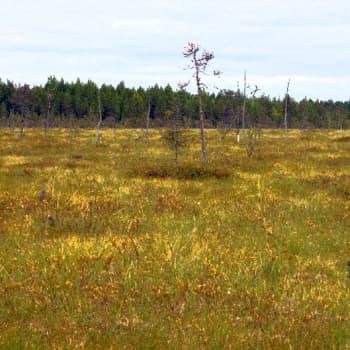 Metsäradio.: Sonkajärven Kinttusalmensuo