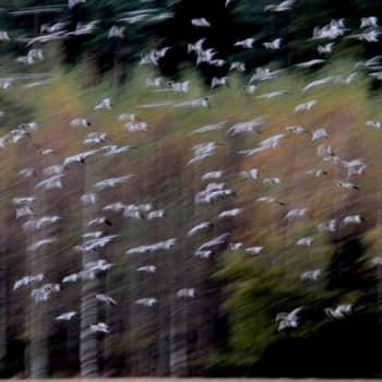 Metsäradio.: Siikalahti äänessä lokakuussa