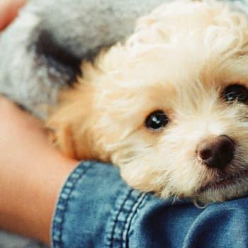 Akuutti: Miten lemmikkieläimet vaikuttavat ihmisen hyvinvointiin?