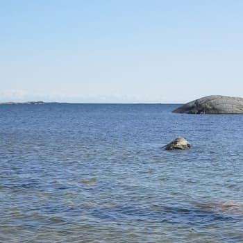 Tiedeykkönen: Itämerellä on toivoa, myrkyt ja ravinteet ovat laskussa