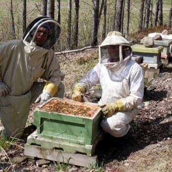 Jokapaikan Reetta: Mehiläistarhalla Evitskogissa