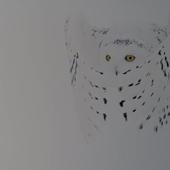 Luontoretki.: Selviytyjät - Markus Varesvuon luontokuvia Vuohijärvellä