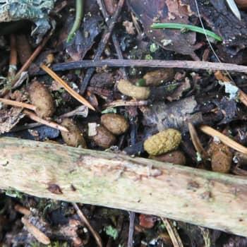 Luontoretki.: Liito-oravaa etsimässä