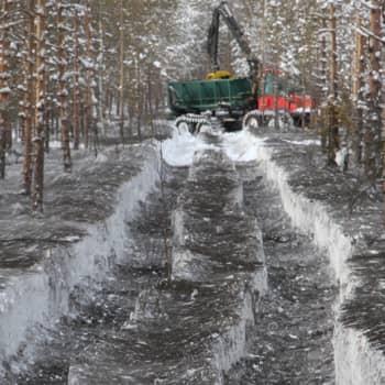 Metsäradio.: Tuhka parantaa puunkasvua