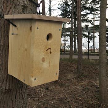 Luontoretki.: Presidentti Sauli Niinistön ja rouva Jenni Haukion linnunpönttöjen asukit