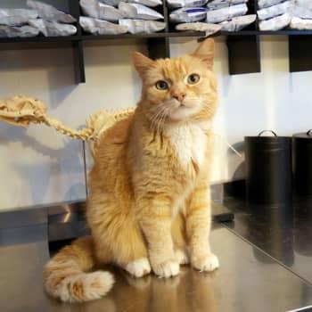 Jokapaikan Reetta: Eläinklinikalla Kruusilassa