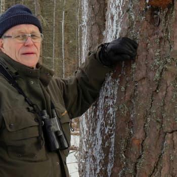 Metsäradio.: Pekka Helo tuntee Kainuun metsät