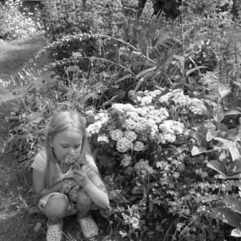 Minna Pyykön maailma: Suomalaisen puutarhan sata vuotta