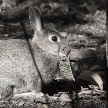 Luontoretki.: Mihin kanit katosivat?