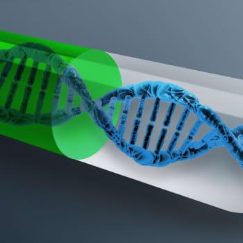 Tiedeykkönen: Miten geenit sotkevat tai säätävät normilääkkeen vaikutusta?