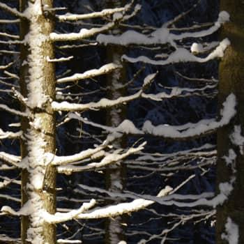 Metsäradio.: Saksalainen metsämystiikka